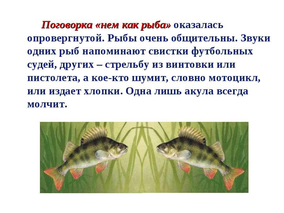 Поговорка «нем как рыба» оказалась опровергнутой. Рыбы очень общительны. Звук...