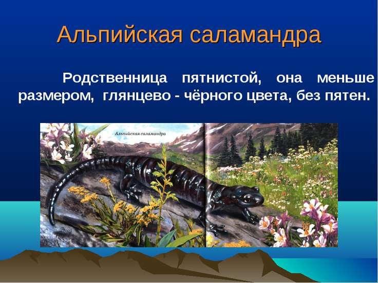 Альпийская саламандра Родственница пятнистой, она меньше размером, глянцево -...