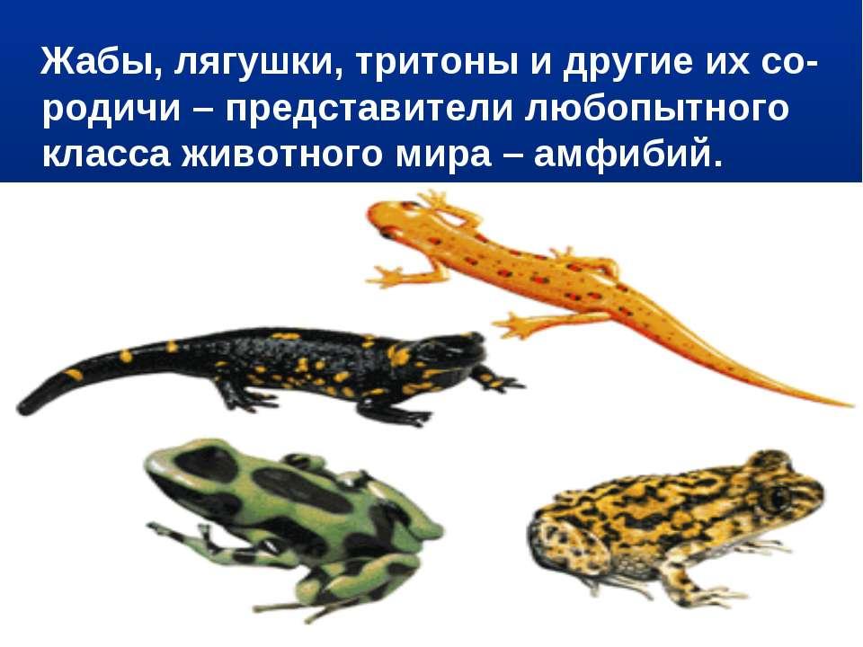 Жабы, лягушки, тритоны и другие их со-родичи – представители любопытного клас...