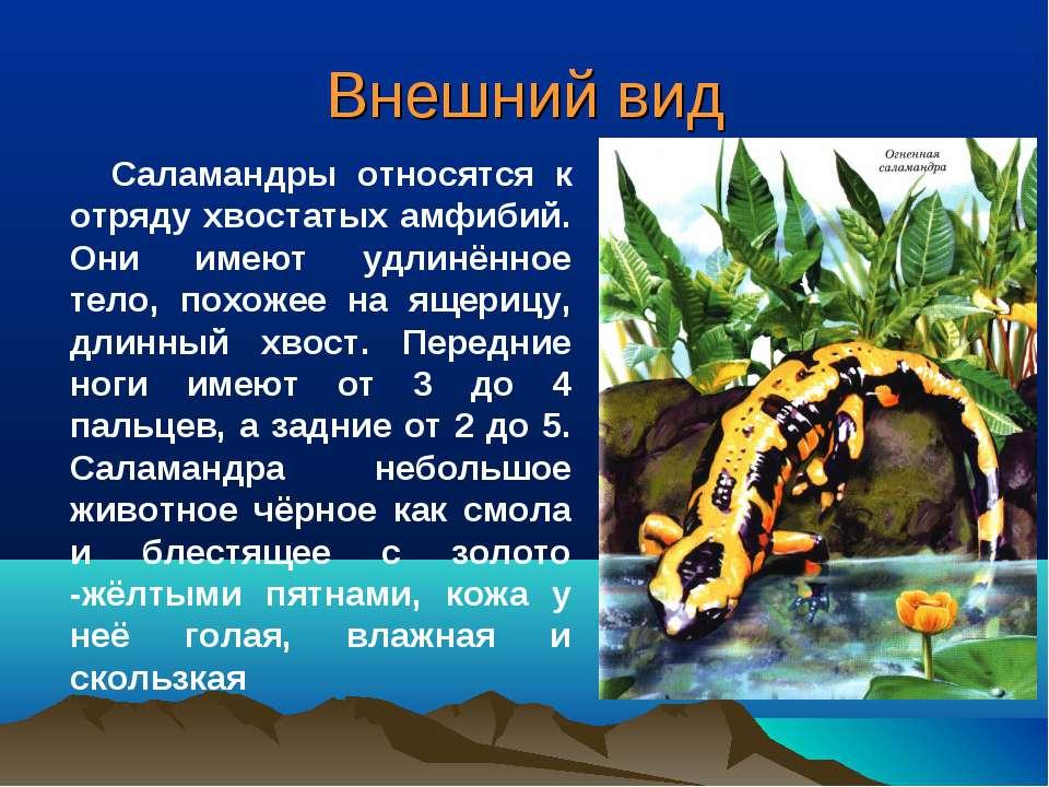 Внешний вид Саламандры относятся к отряду хвостатых амфибий. Они имеют удлинё...