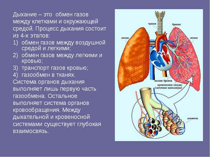 Дыхание – это обмен газов между клетками и окружающей средой. Процесс дыхания...