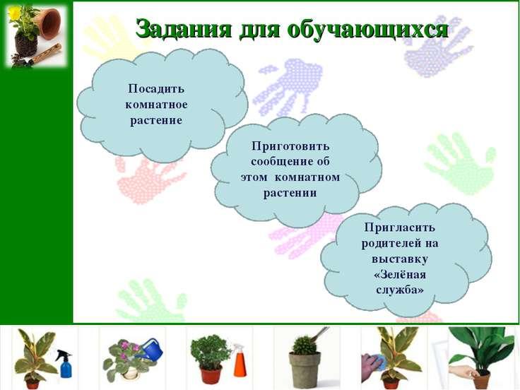 Задания для обучающихся Посадить комнатное растение Приготовить сообщение об ...