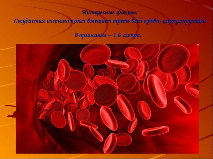 Интересные факты: Сосудистая система кожи вмещает треть всей крови, циркулиру...