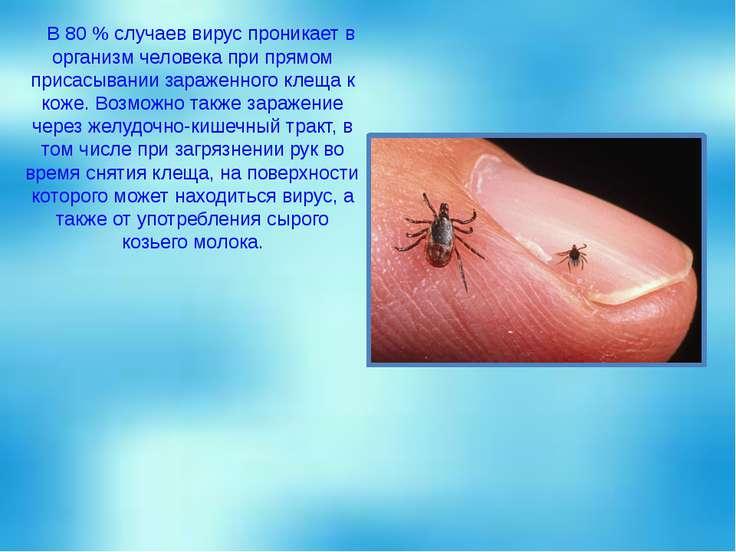 В 80 % случаев вирус проникает в организм человека при прямом присасывании за...