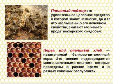 Перга или пчелиный хлеб — незаменимый белково-витаминный корм. Это мнение под...