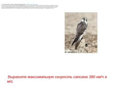 № 3. За звание самого быстрого существа борются две птицы– черный стриж исо...
