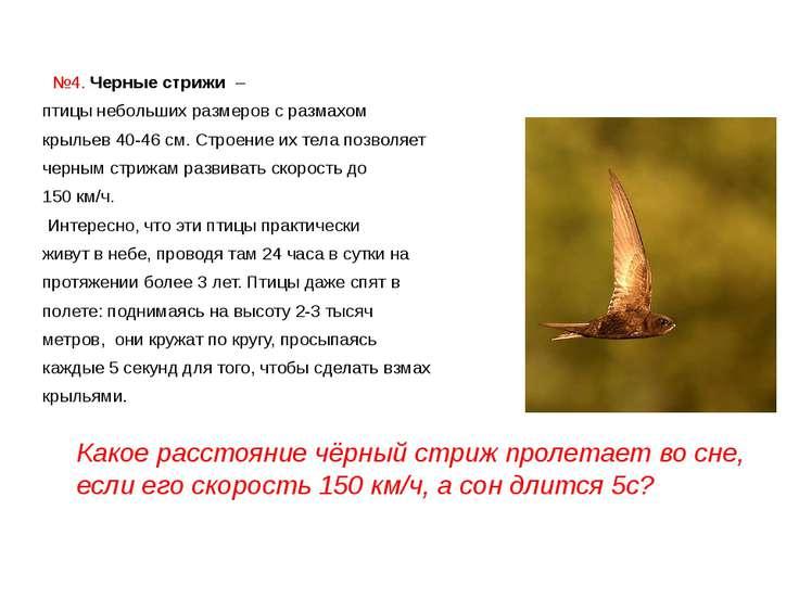 №4. Черные стрижи – птицы небольших размеров с размахом крыльев 40-46 см. ...