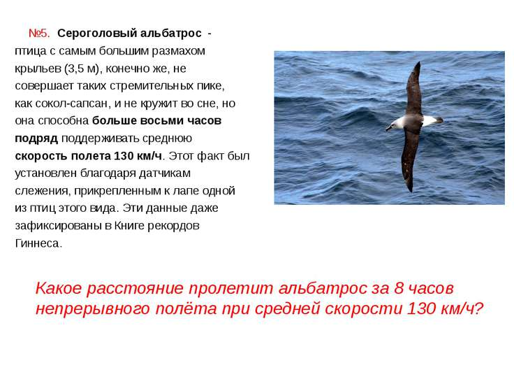 №5. Сероголовый альбатрос - птица с самым большим размахом крыльев (3,5 м), ...
