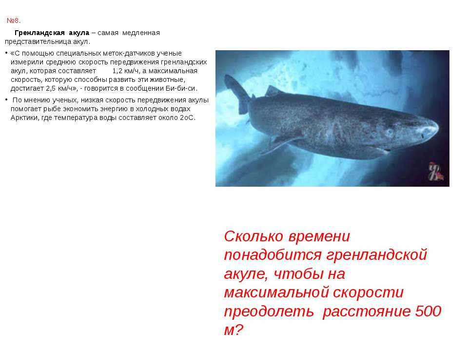 №8. Гренландская акула – самая медленная представительница акул. «С помощью с...