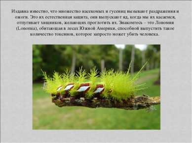 Издавна известно, что множество насекомых и гусениц вызывают раздражения и ож...