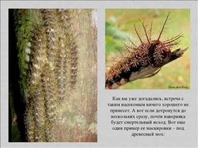 Как вы уже догадались, встреча с таким насекомым ничего хорошего не принесет....