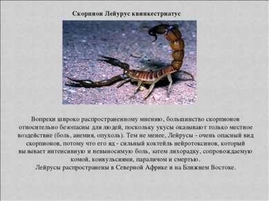Скорпион Лейурус квинкестриатус Вопреки широко распространенному мнению, боль...