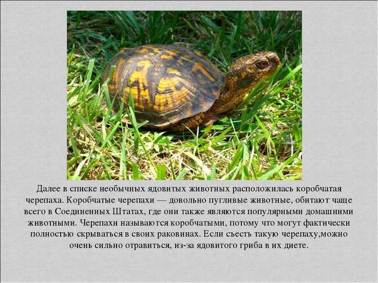 Далее в списке необычных ядовитых животных расположилась коробчатая черепаха....