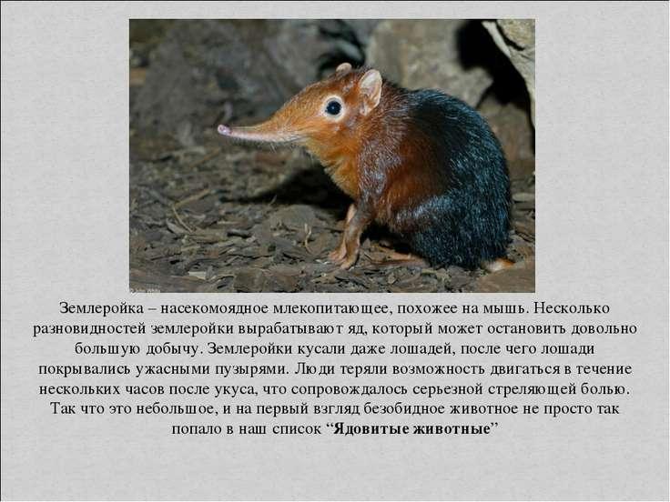 Землеройка – насекомоядное млекопитающее, похожее на мышь. Несколько разновид...