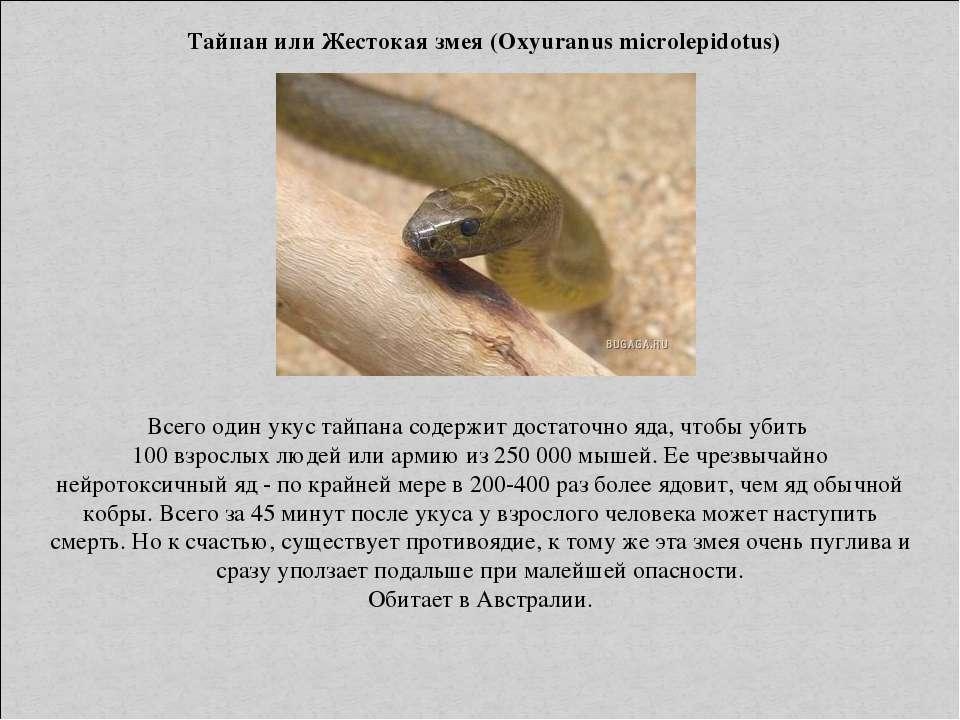 Тайпан или Жестокая змея (Oxyuranus microlepidotus) Всего один укус тайпана с...