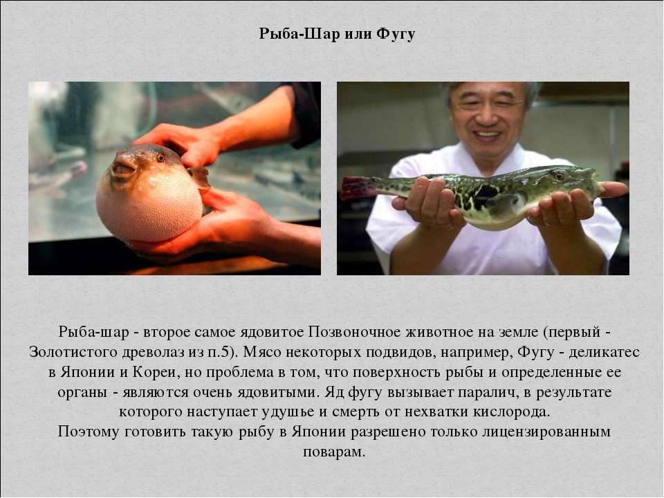 Рыба-Шар или Фугу Рыба-шар - второе самое ядовитое Позвоночное животное на зе...