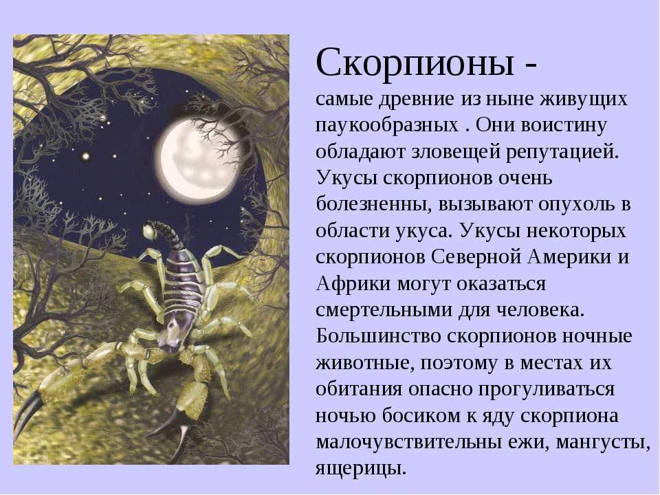 Скорпионы - самые древние из ныне живущих паукообразных . Они воистину облада...
