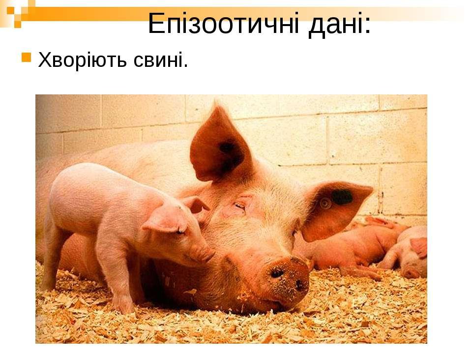 Епізоотичні дані: Хворіють свині.