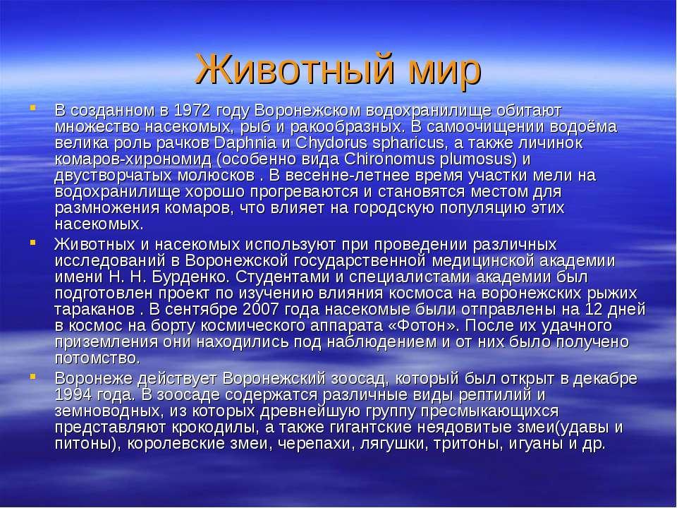 Животный мир В созданном в 1972 году Воронежском водохранилище обитают множес...