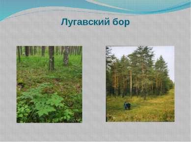Лугавский бор