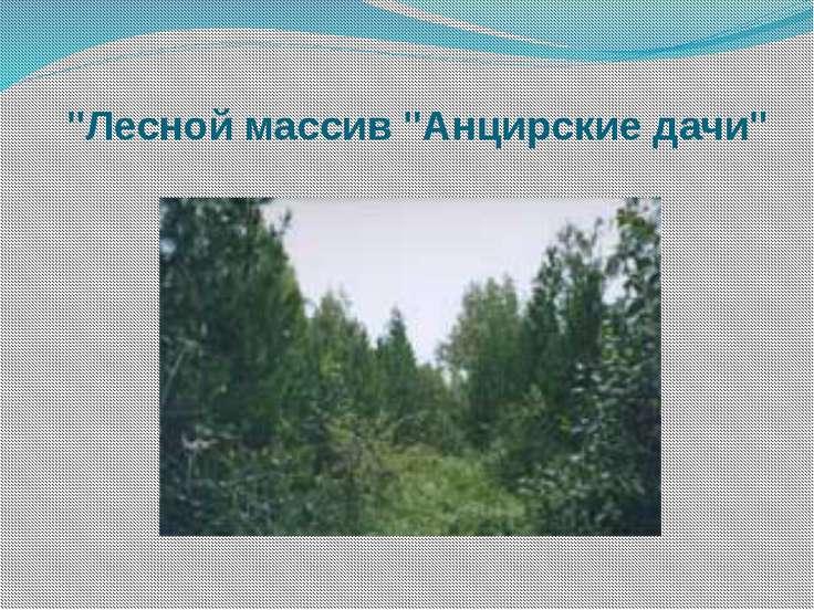 """""""Лесной массив """"Анцирские дачи"""""""