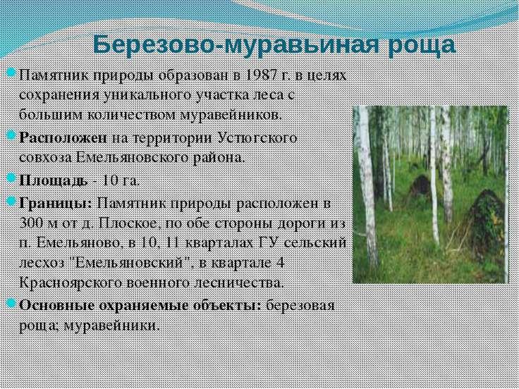 Березово-муравьиная роща Памятник природы образован в 1987 г. в целях сохране...
