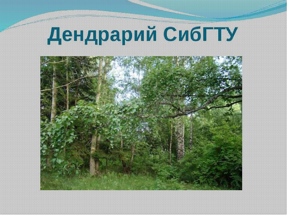 Дендрарий СибГТУ
