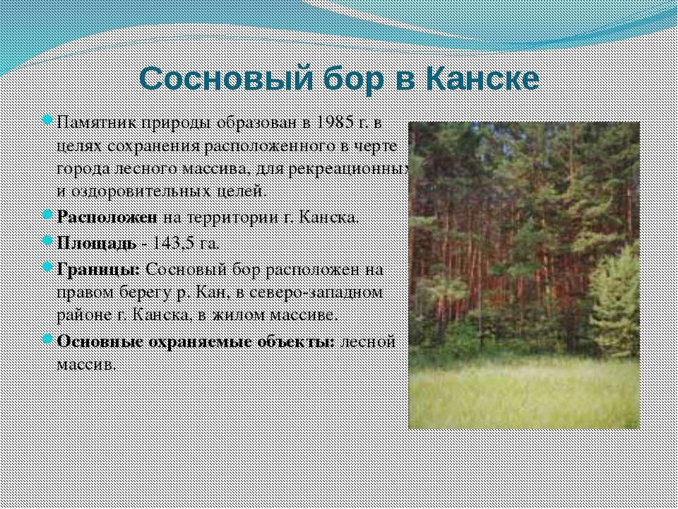Сосновый бор в Канске Памятник природы образован в 1985 г. в целях сохранения...