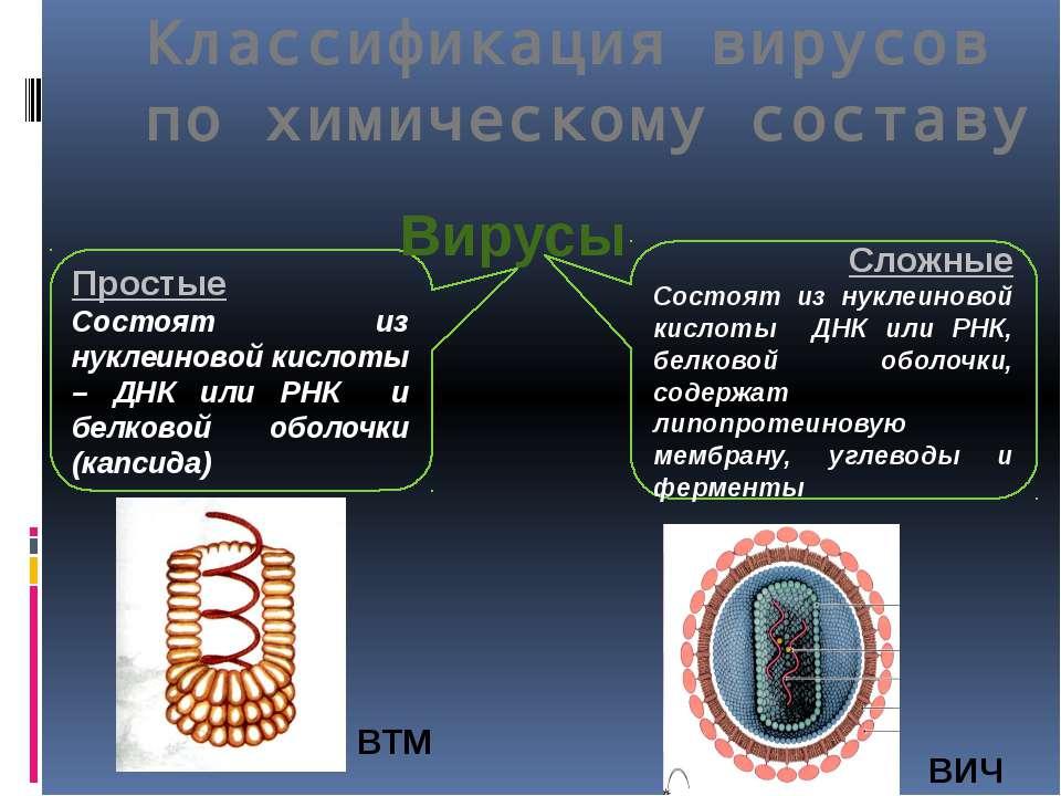 Простые Состоят из нуклеиновой кислоты – ДНК или РНК и белковой оболочки (кап...