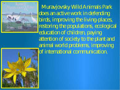 Muravjovsky Wild Animals Park does an active work in defending birds, improvi...