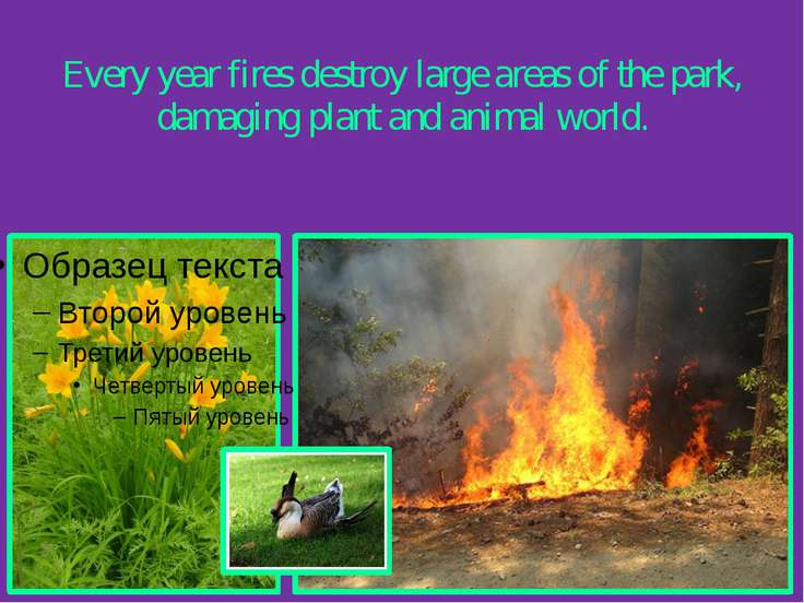Every year fires destroy large areas of the park, damaging plant and animal w...
