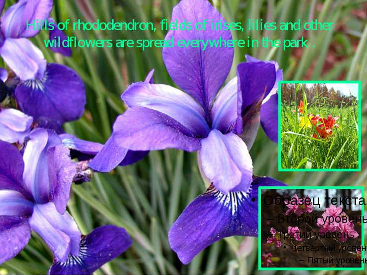 Hills of rhododendron, fields of irises, lilies and other wildflowers are spr...