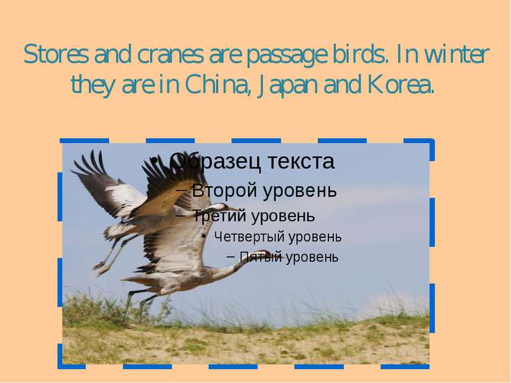 Stores and cranes are passage birds. In winter they are in China, Japan and K...