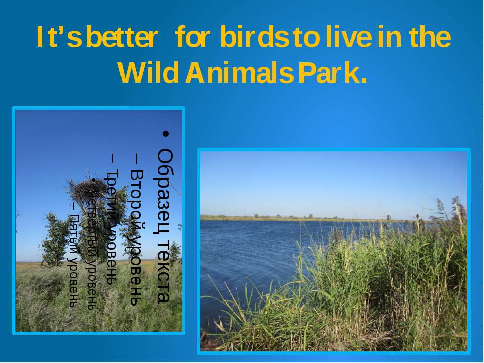 It's better for birds to live in the Wild Animals Park.