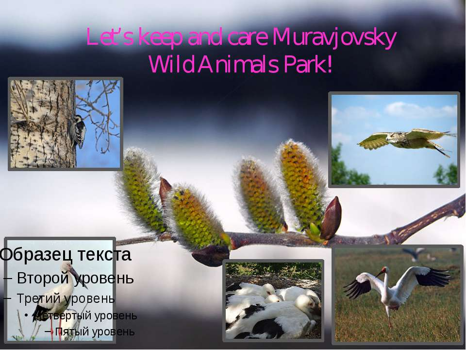 Let's keep and care Muravjovsky Wild Animals Park!