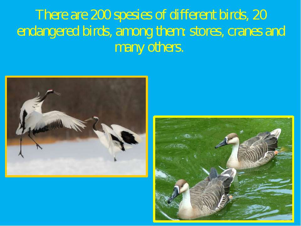 There are 200 spesies of different birds, 20 endangered birds, among them: st...