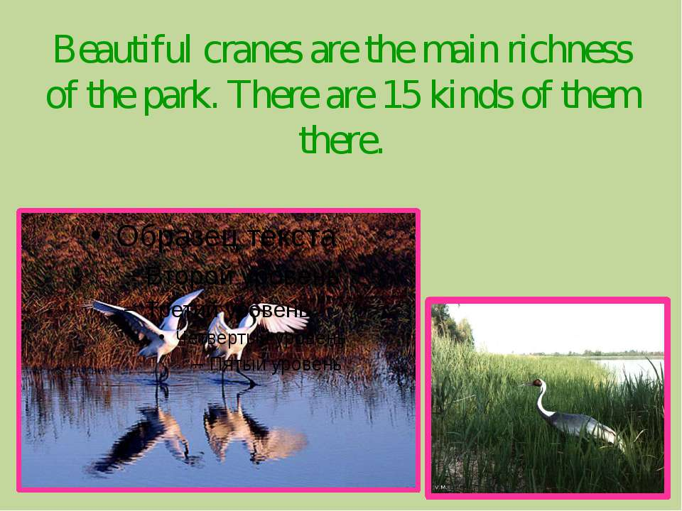 Beautiful cranes are the main richness of the park. There are 15 kinds of the...
