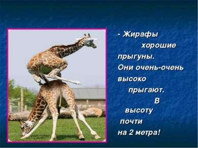- Жирафы хорошие прыгуны. Они очень-очень высоко прыгают. В высоту почти на 2...