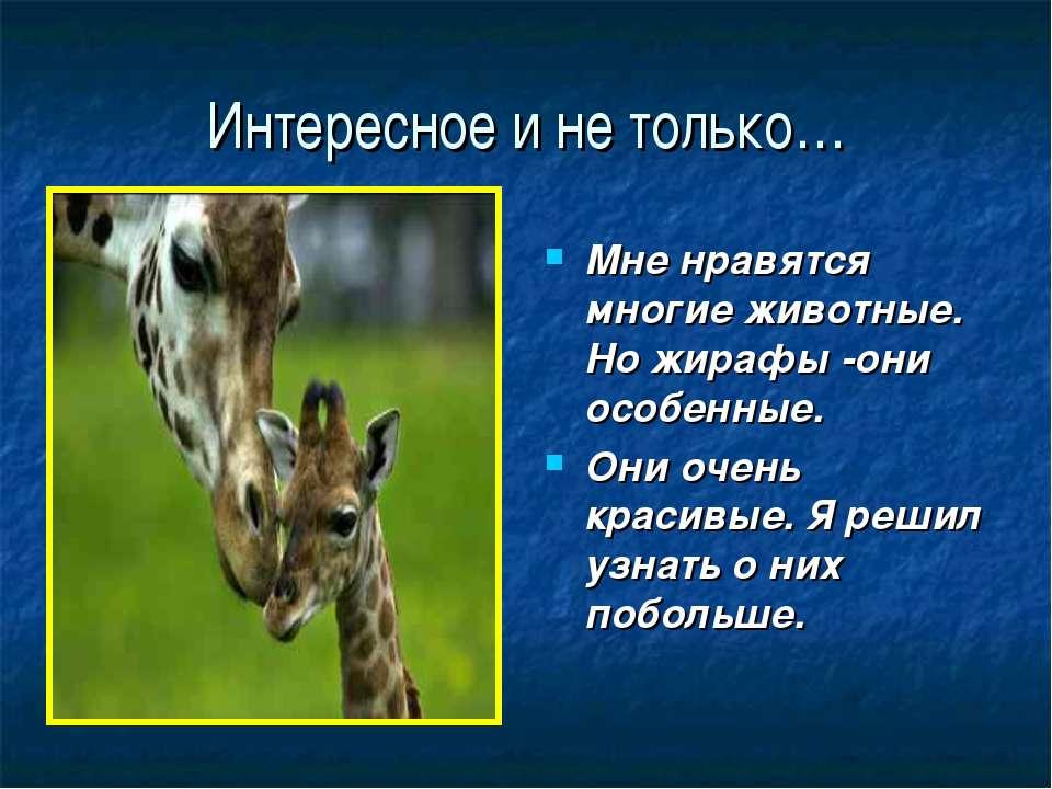 Интересное и не только… Мне нравятся многие животные. Но жирафы -они особенны...