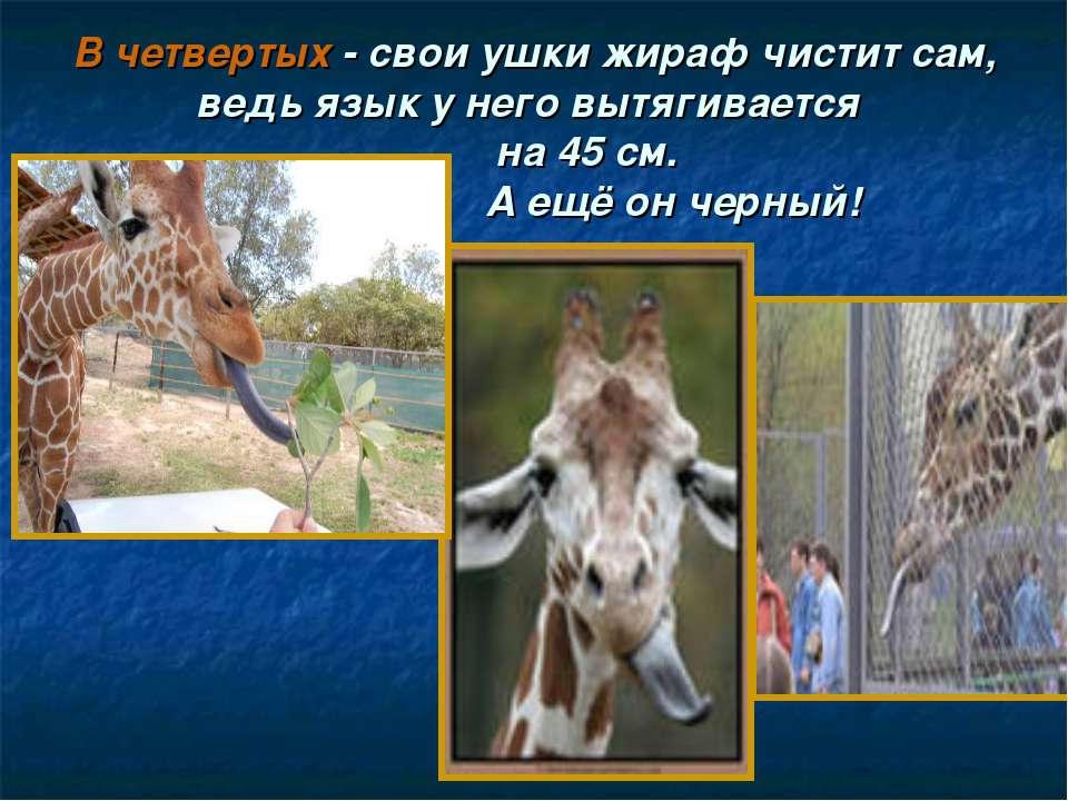 В четвертых - свои ушки жираф чистит сам, ведь язык у него вытягивается на 45...