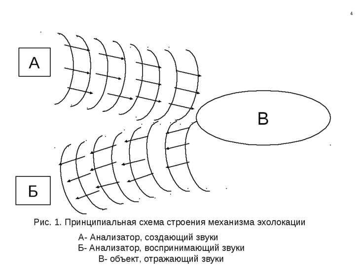 А Б В А- Анализатор, создающий звуки Б- Анализатор, воспринимающий звуки В- о...