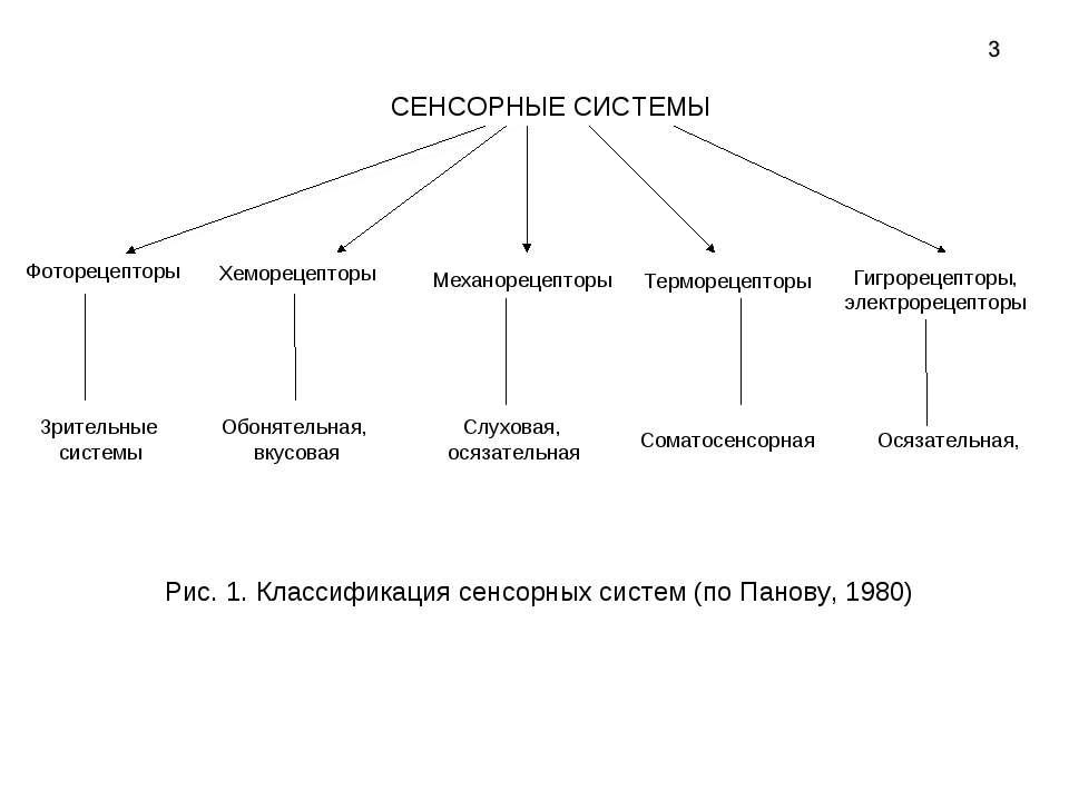 СЕНСОРНЫЕ СИСТЕМЫ Гигрорецепторы, электрорецепторы Механорецепторы Хеморецепт...