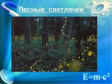 Лесные светлячки