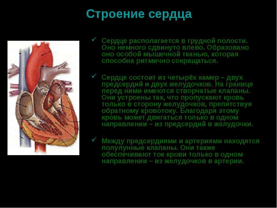 Строение сердца Сердце располагается в грудной полости. Оно немного сдвинуто ...