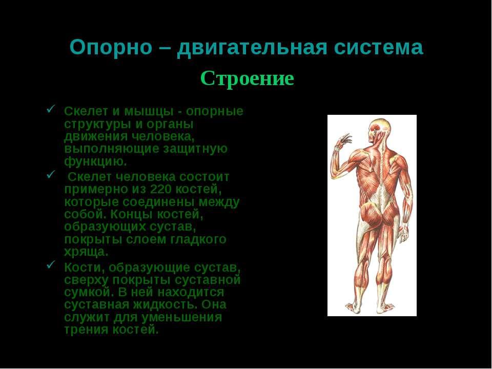 Опорно – двигательная система Скелет и мышцы - опорные структуры и органы дви...