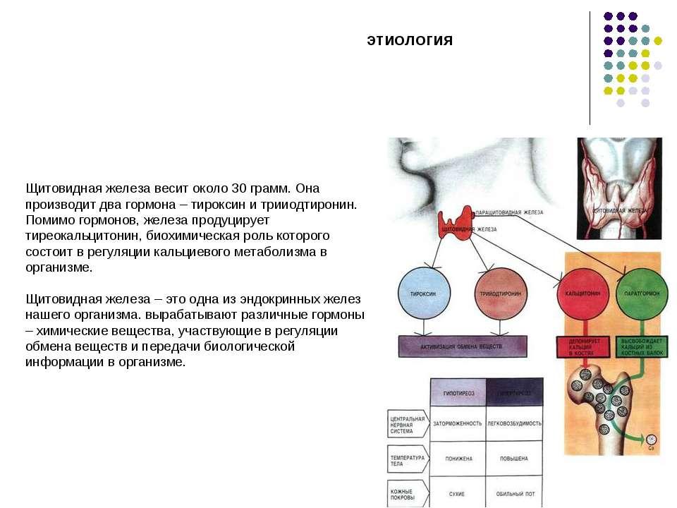 Щитовидная железа весит около 30 грамм. Она производит два гормона – тироксин...