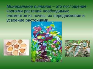 Минеральное питание – это поглощение корнями растений необходимых элементов и...