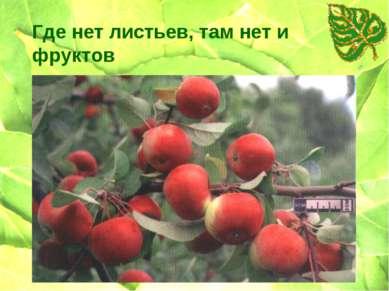 Где нет листьев, там нет и фруктов