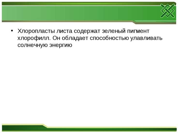 Хлоропласты листа содержат зеленый пигмент хлорофилл. Он обладает способность...