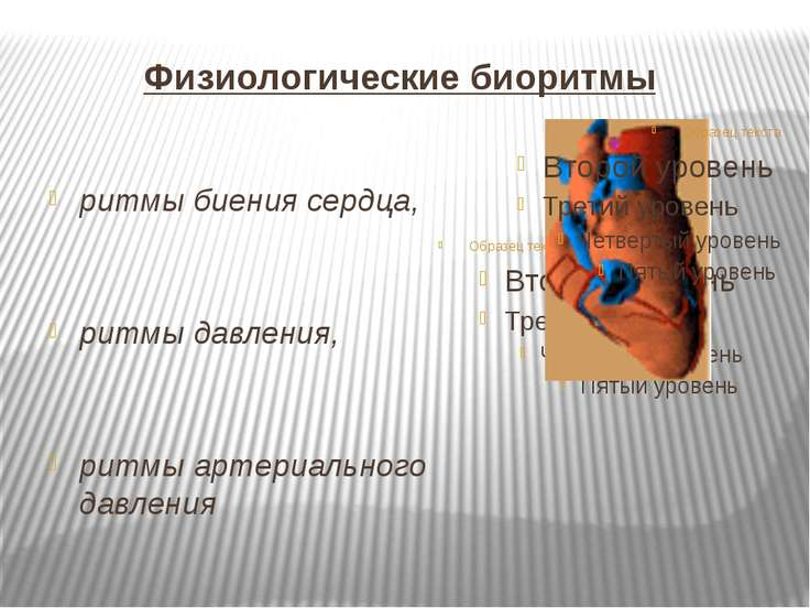 Физиологические биоритмы ритмы биения сердца, ритмы давления, ритмы артериаль...